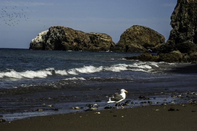 Channel Island - https://www.goodfreephotos.com/cache/united-states/california/channel-islands-national-park/beach-of-santa-cruz-island-channel-islands-national-park-california_800.jpg