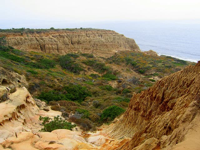 Torrey Pines State Natural Reserve - https://upload.wikimedia.org/wikipedia/commons/thumb/a/a1/Torrey_Pines_State_Park_Valley.jpg/640px-Torrey_Pines_State_Park_Valley.jpg